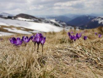 purple flowers growing in winter